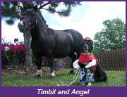 Timbit and Angel