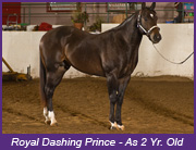 Royal Dashing Prince